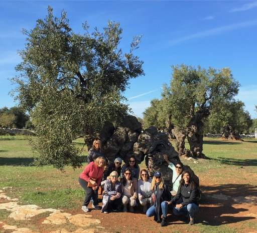 Ancient Olive Tree, Puglia, Italy